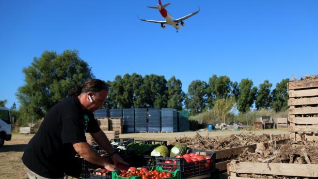 Un agricultor del Prat de Llobregat trabajado con hortalizas locales mientras un avión sobrevuela el campo.