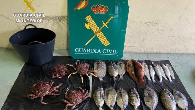 Intervenidos 14 kilos de capturas ilegales de varias especies y cuatro centollas en Malpica (A Coruña)