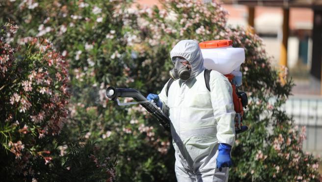 """El alcalde de Coria avisa que un estudio señala la """"proliferación"""" de mosquitos transmisores del virus del Nilo"""