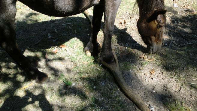 Animalistas reúnen más de 168.000 firmas para promulgar una ley contra el maltrato en caballos