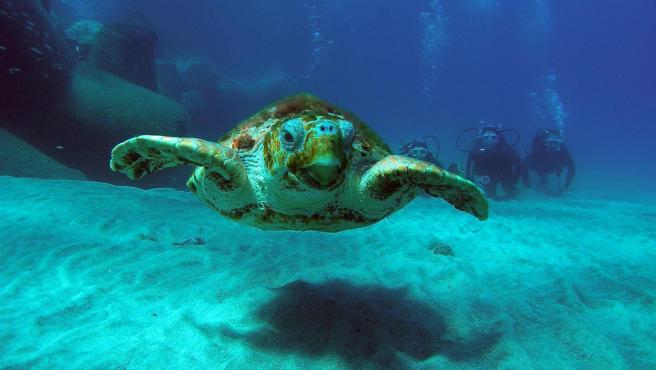 Imagen de una tortuga marina.