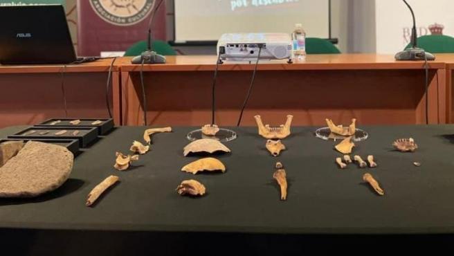 Los restos hallados en Bedmar por el Centro municipal de Investigaciones Prehistóricas Paleomágina