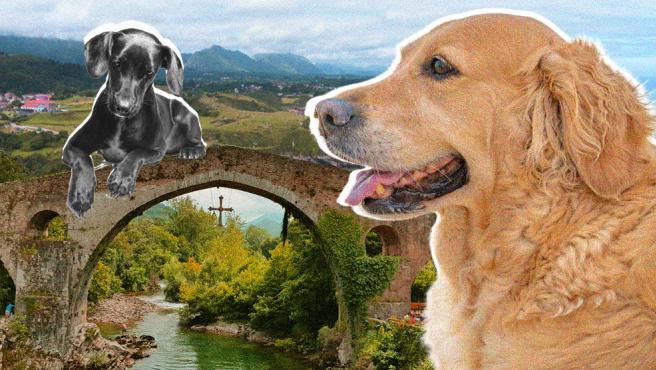 Viajar a Asturias con perros