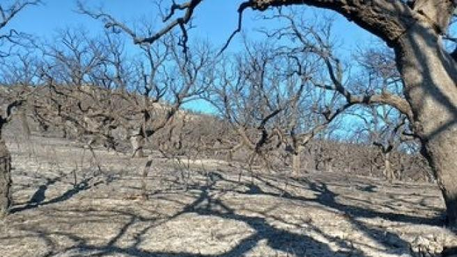 Controlado el fuego de Alburquerque, el primer gran incendio forestal del verano en Extremadura