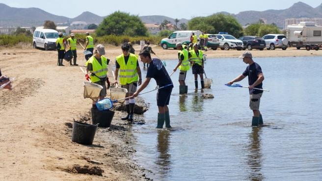 Vuelven a abrir al baño tras su limpieza seis de las playas afectadas por la aparición de peces muertos en el Mar Menor