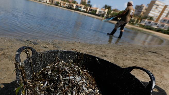 Cierran las playas desde Cala del Pino a Playa Honda para retirar los peces muertos en la orilla del Mar Menor