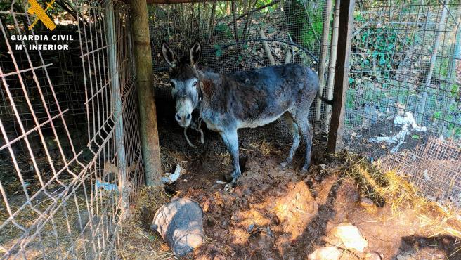 Investigado por presunto maltrato animal y tener aves protegidas sin permiso en Girona