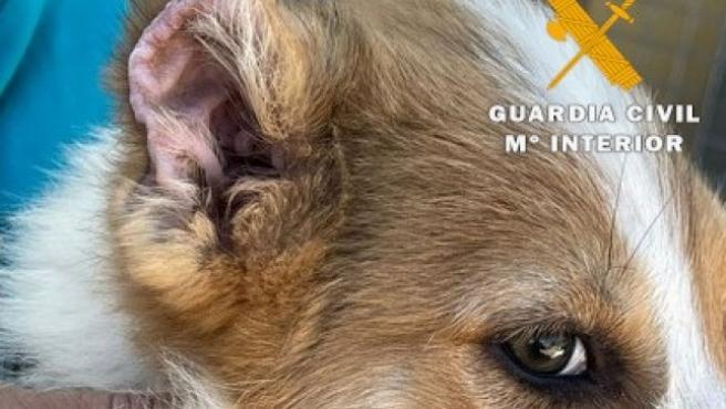 Uno de los cachorros mutilados en Caudete.