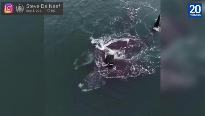 El increíble vídeo de dos ballenas 'abrazándose' en mitad del Océano.