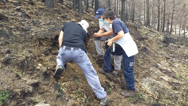 Investigadores del CIF gallego colaboran en la evaluación del impacto en el suelo del incendio de Navalacruz