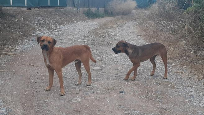 Libera pide que Depor, Celta y Lugo fomenten la adopción de animales como hacen los equipos de fútbol rumanos