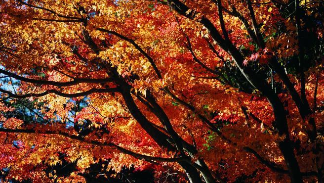 Colores del otoño en un bosque.