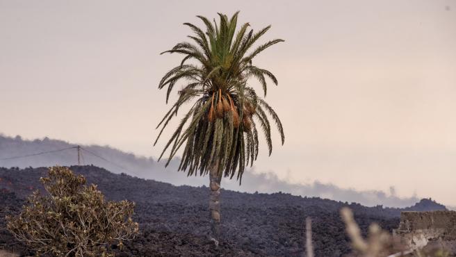 Imagen de la isla de La Palma tras la erupción volcánica.