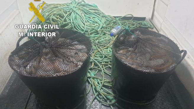 Intervenido pulpo valorado en 1.800 euros en Camariñas tras ser descargado en un vehículo sin pasar por la lonja