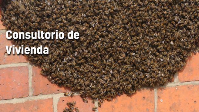Unas abejas en una pared de una vivienda.