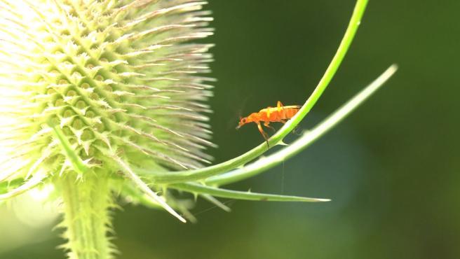 Un estudio apunta a que la luz de las ciudades influye en la disminución de los insectos