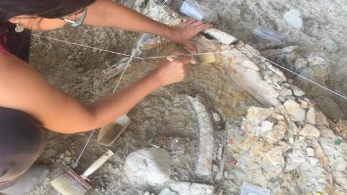 Hallan costillas de mamut, excrementos de hiena y herramientas de sílex de hace un millón de años en Tarragona