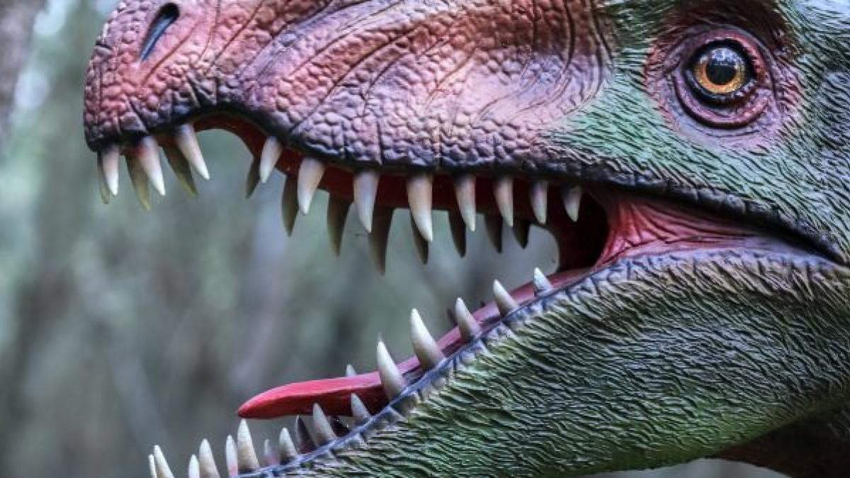 Dinosaurios Ultimas Noticias De Dinosaurios En 20minutos Es Los dibujos de dinosaurios mas bonitos estan aqui! ultimas noticias de dinosaurios en