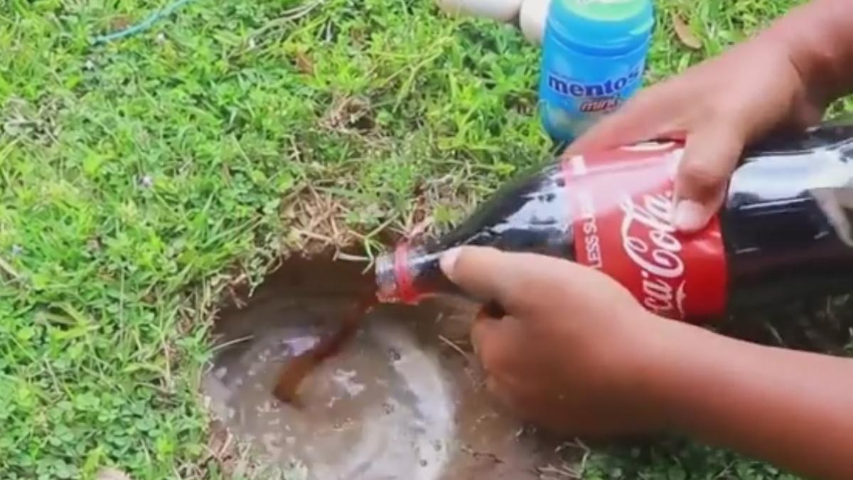 Mentos, huevos y Coca-Cola: un cóctel letal para pescar siluros