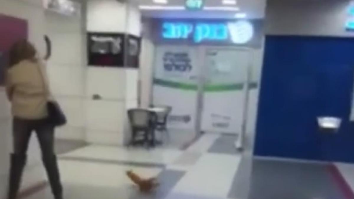 Un gato atrapa a un murciélago en pleno vuelo
