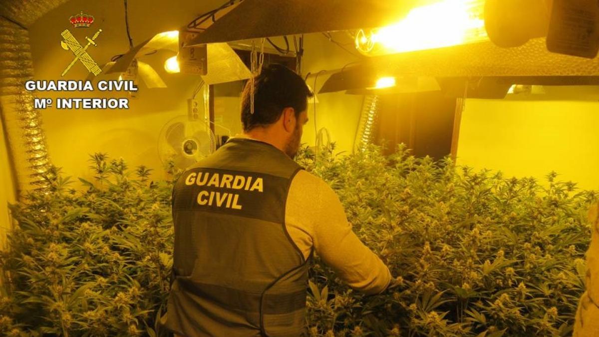 Hallan un cultivo de marihuana con un consumo de luz tan alto que ponía en peligro a todo un pueblo