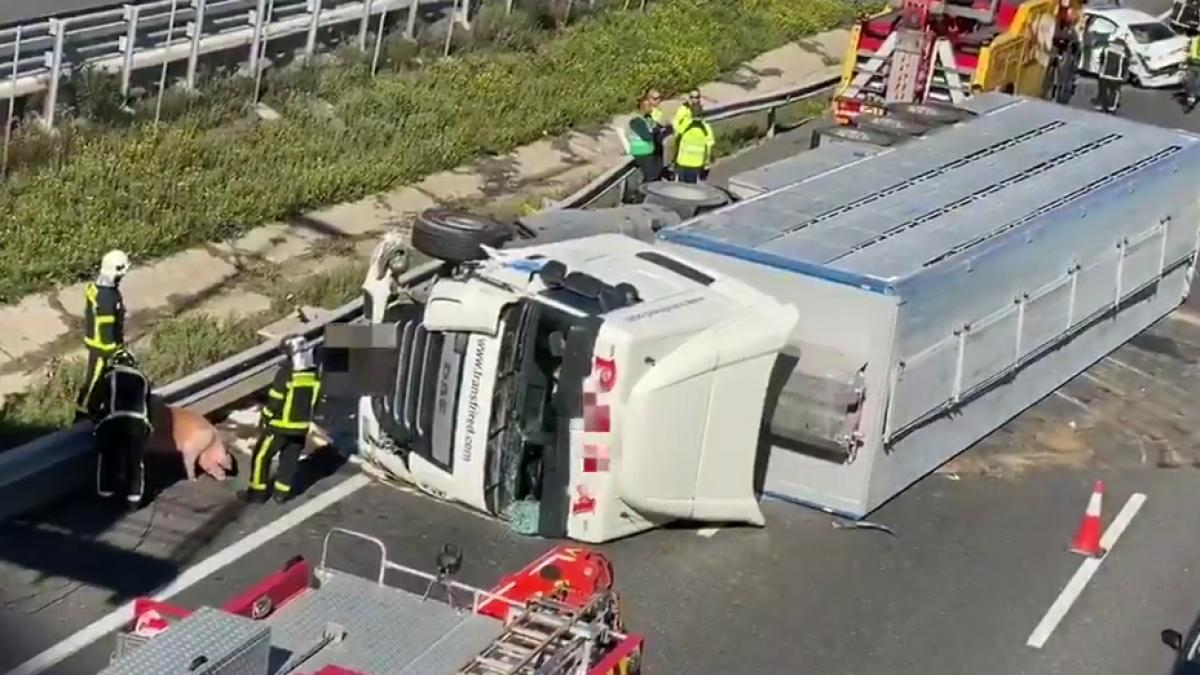 El accidente de un camión en la A-6 deja dos heridos, varios kilómetros de retenciones y cerdos en l ...