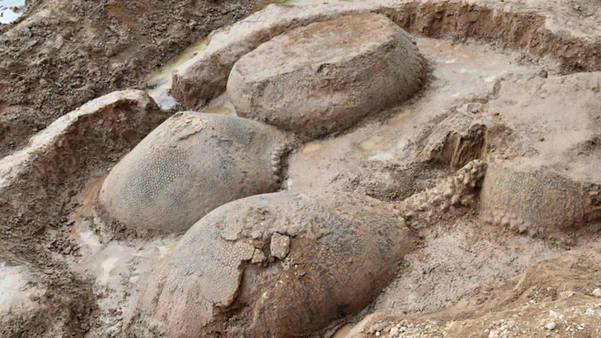 Descubren los restos de cuatro armadillos del tamaño de un coche y con 20.000 años de antigüedad