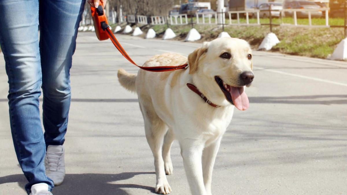 Imagen-de-una-perro-de-paseo