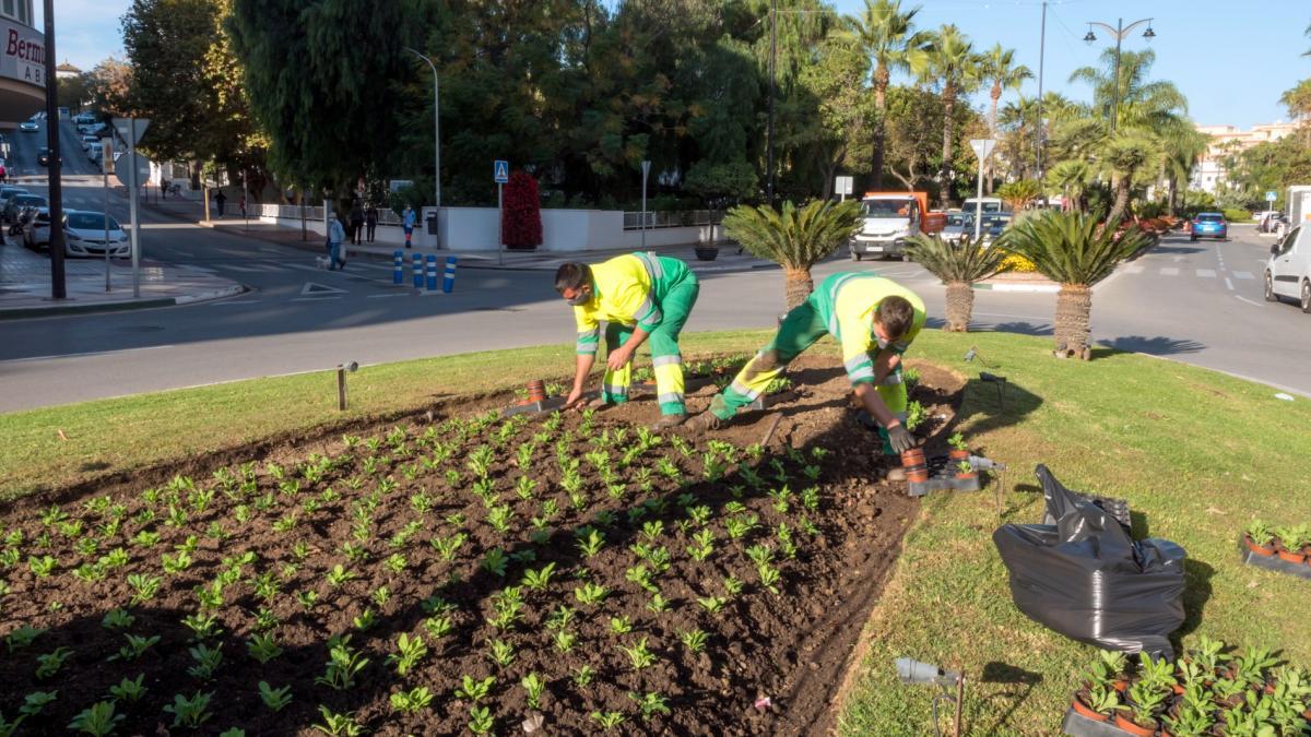 plantacion-flores-jardines-ayuntamiento-