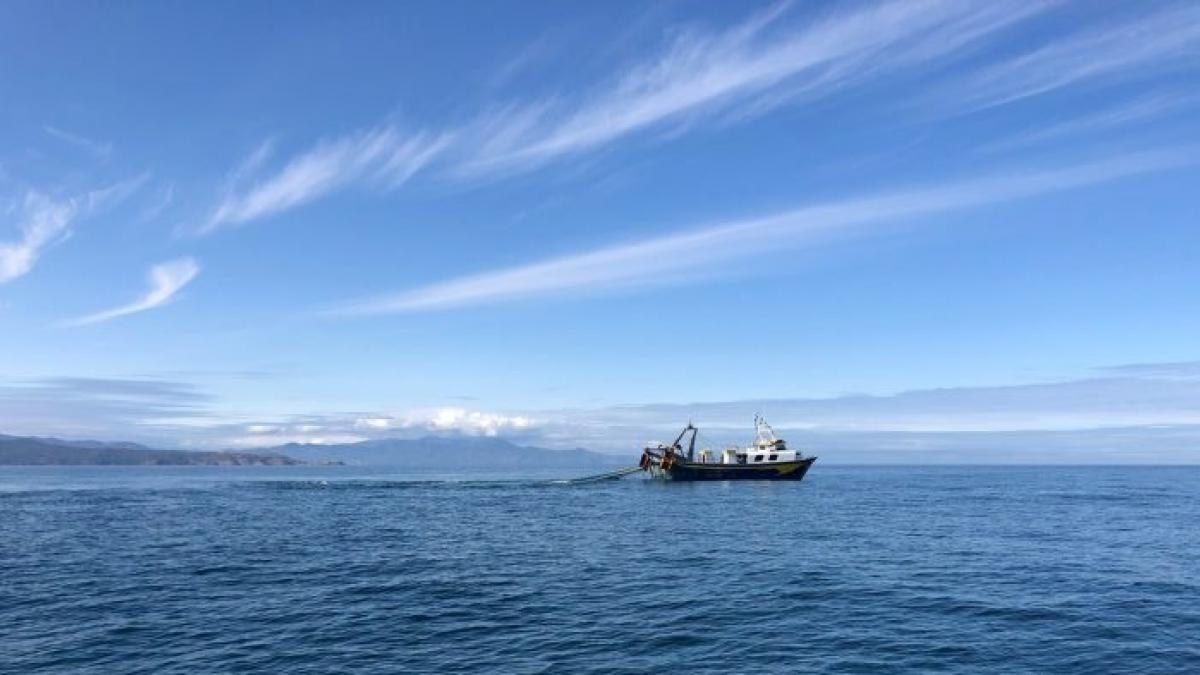 El Govern destina 14.900 euros al seguimiento del delfín mular del Cap de Creus (Girona)