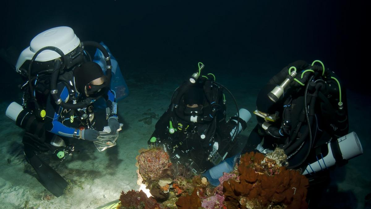 https://imagenes.20minutos.es/files/og_thumbnail/uploads/imagenes/2021/02/01/la-plitidepsina-es-un-compuesto-que-se-extrae-de-un-organismo-marino-la-ascidia-aplidium-albicans-que-se-encontro-en-una-bahia-de-las-islas-baleares.jpeg