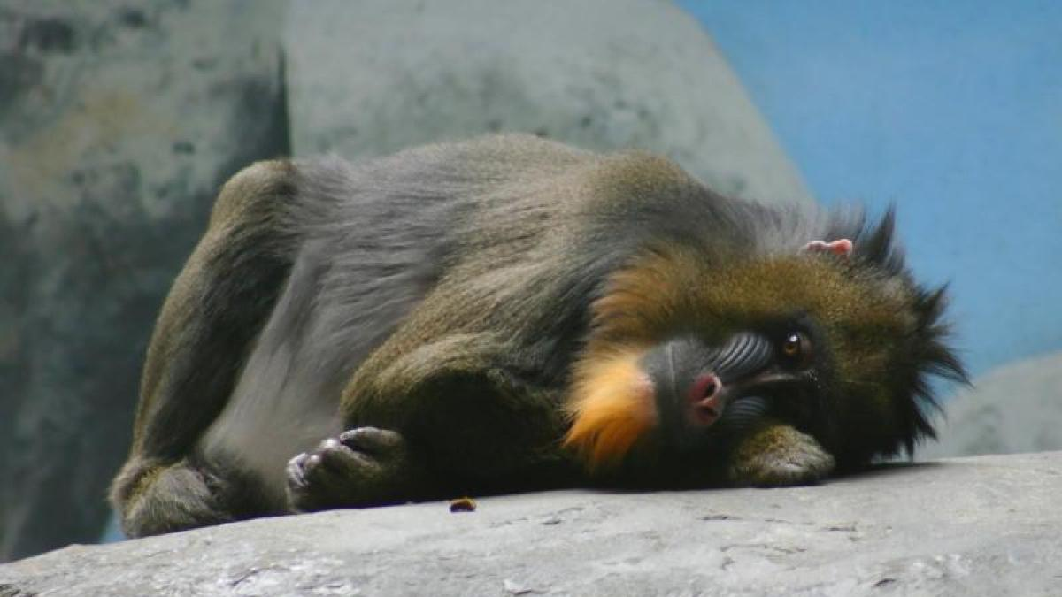 Los animales también practican el distanciamiento social cuando enferman