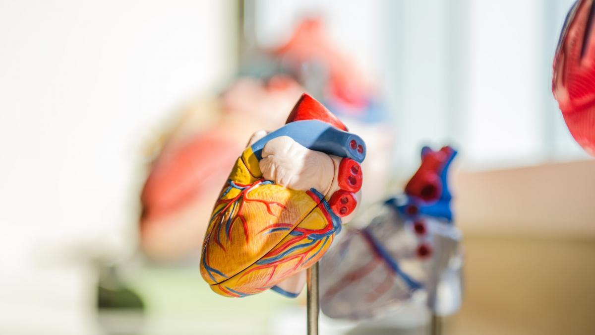 ¿Existen las 'corazonadas'? Así actúan las neuronas del corazón