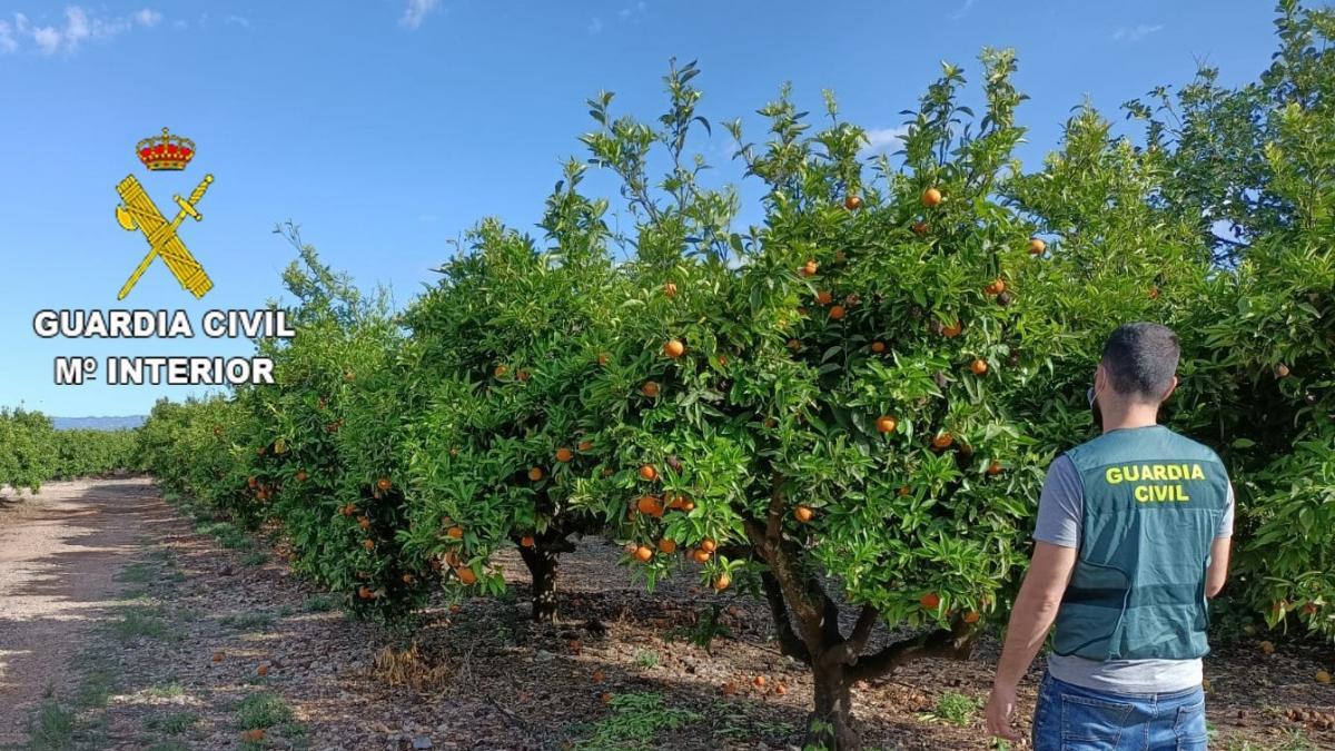Sucesos.- Detenidas dos personas e investigada otra por sustraer 35.000 kilos de naranjas