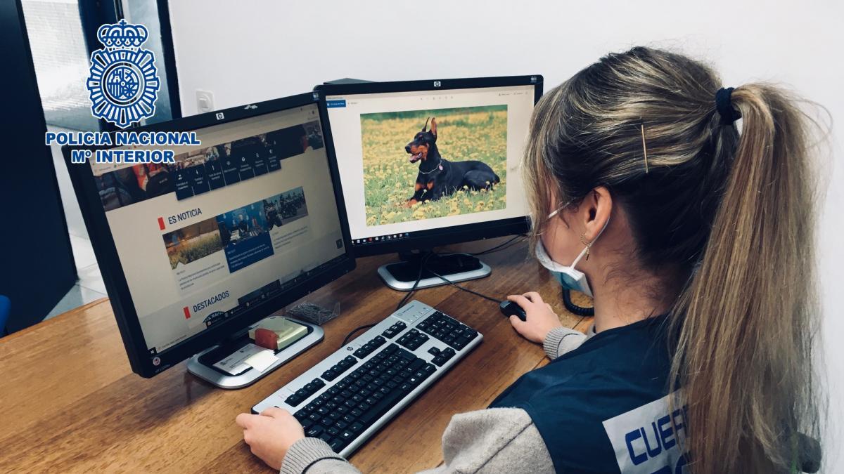 Dos detenidas por presuntamente estafar con la venta de perros de raza desde Girona