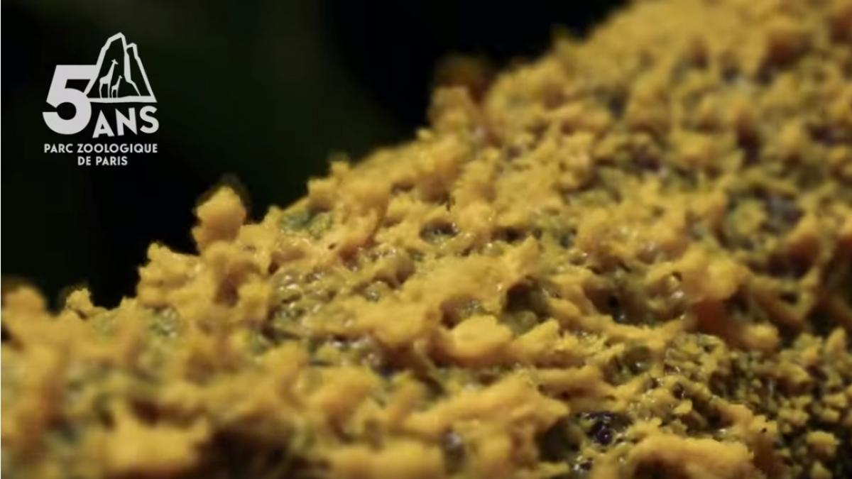 'The Blob', el viscoso organismo unicelular que no es animal, ni hongo... pero es capaz de resolver problemas