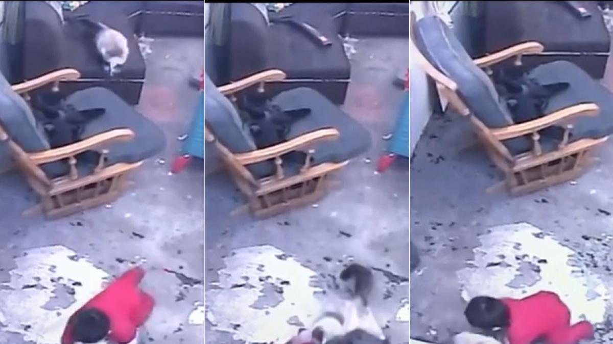 Una gata evita que un bebé caiga por unas escaleras en Colombia
